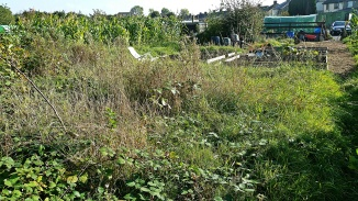 Overgrown part of the allotment