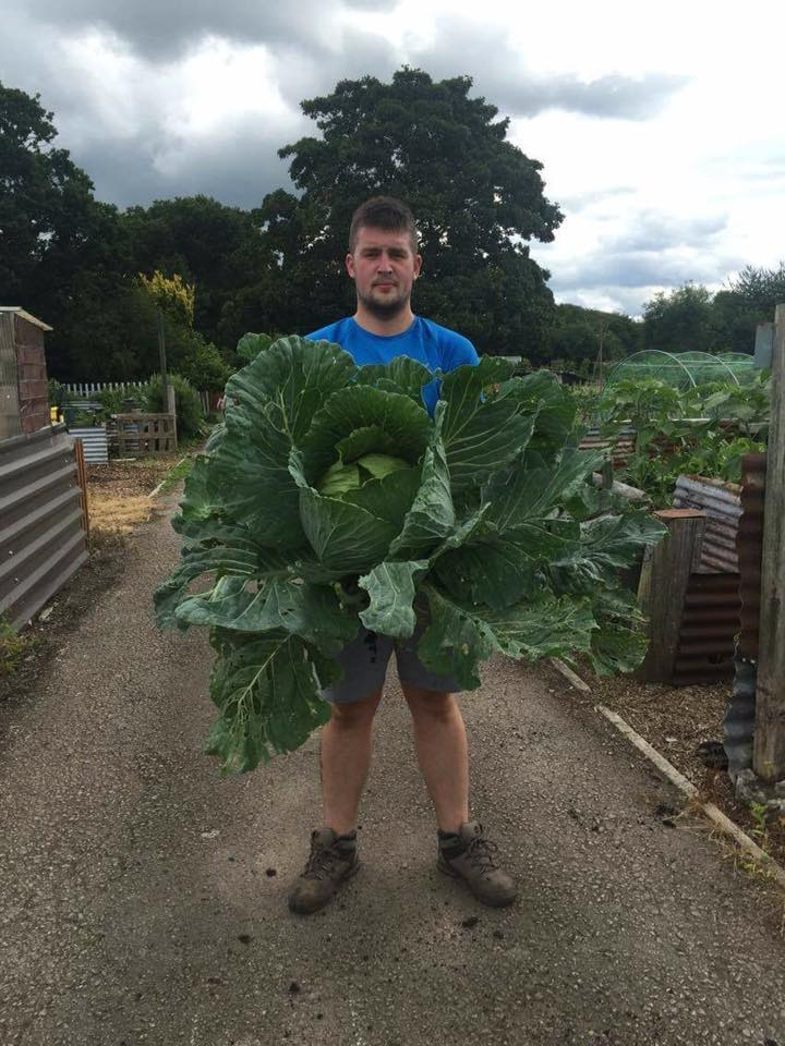 cabbage-pic