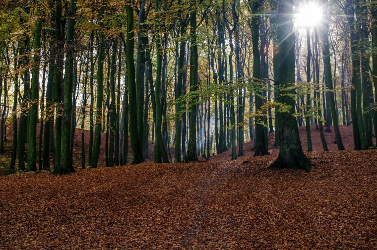 trees-1030981_1280