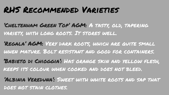 Recommended beetroot varieties