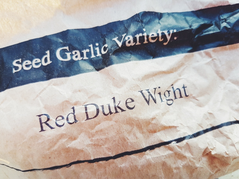 Garlic Red Duke
