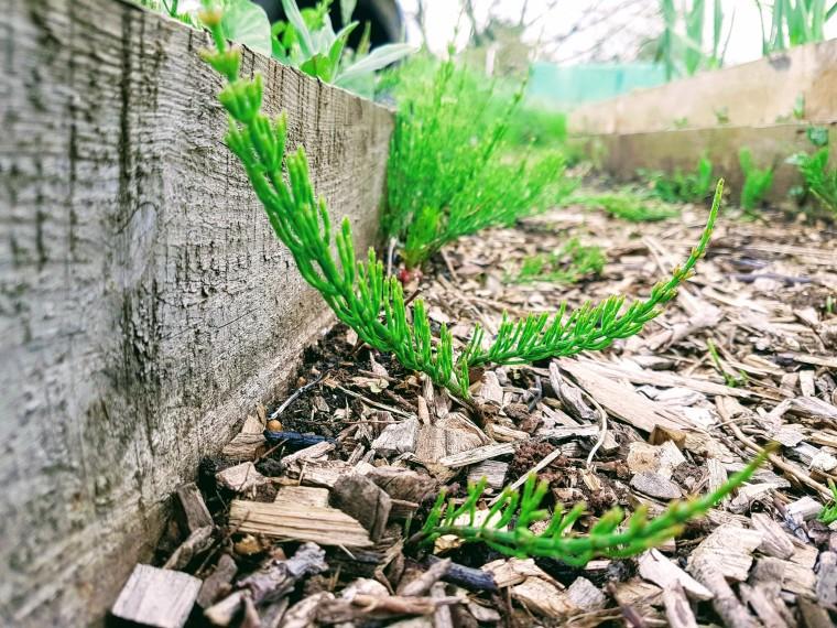 weedy path