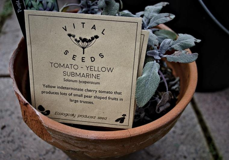 Tomato Seed packet